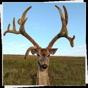 Deer 2018